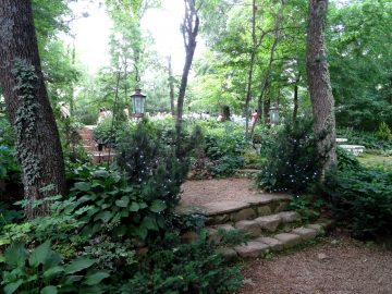 woodland stairway