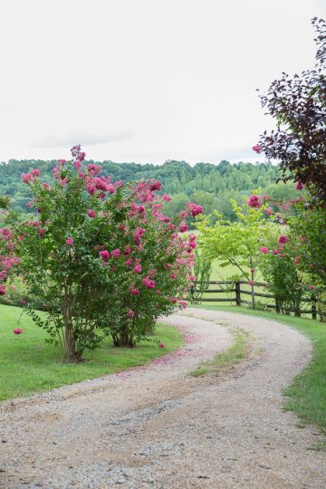 Country lane. Deana Fleenor Photography