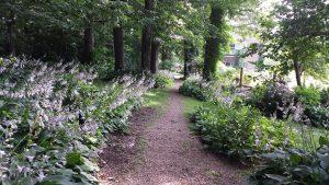 late June woods