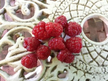 Raspberry harvest